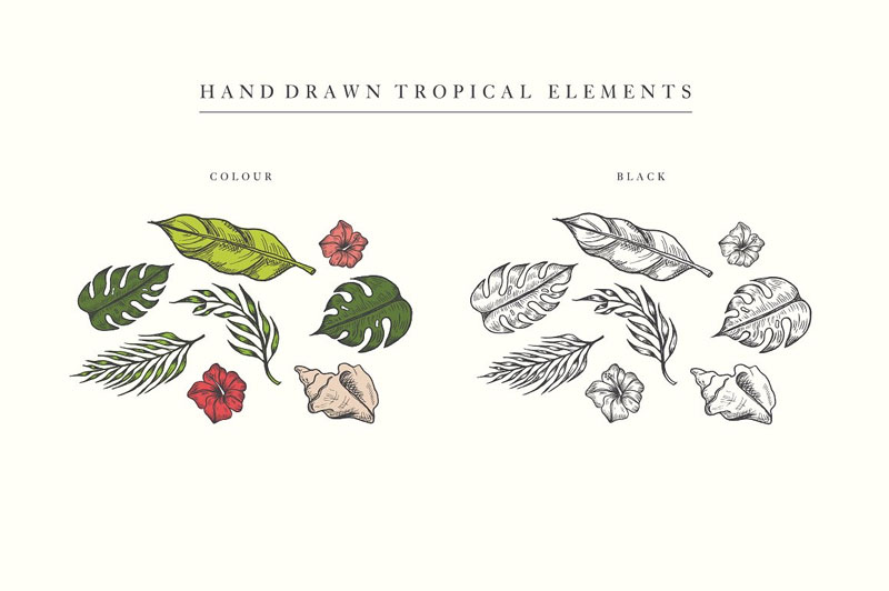 Free-Hand-Drawn-Tropical-Vector-Graphics-Elements-2018-1