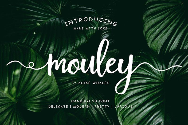 Free-Mouley-Script-Demo-2018-For-Designers-1