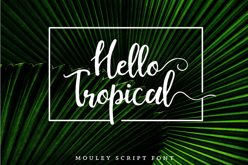 Free-Mouley-Script-Demo-2018-For-Designers-3